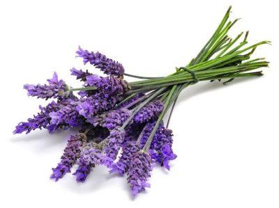 cvetok-lavandy
