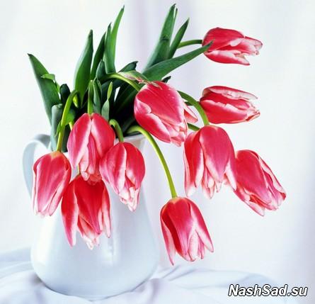 Как оживить тюльпаны, что нужно сделать