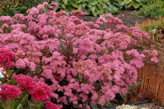 Sedum roof detail