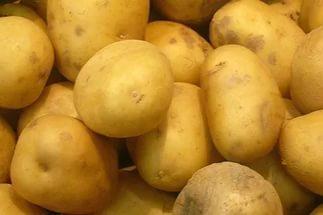 kartofel-luchshie-sorta-foto