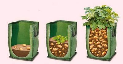 Выращивание картофеля в ящиках фото