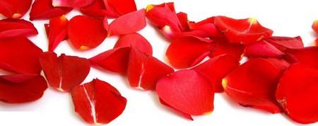 Лепестки роз фото