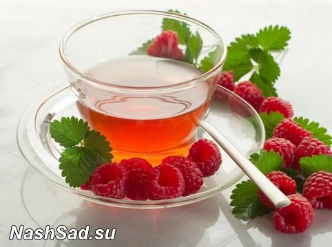 Чай из листьев малины для беременных