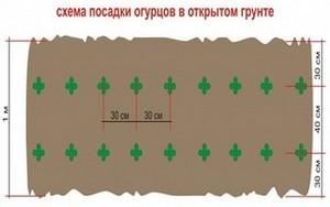Схема посадки огурцов в грунт